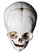 Lebka a obratle - Skull and vertebrae
