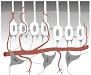 Pulpa - morfologie a fyziologie, patomorfologie a patofyziologie
