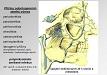 Záněty očnice způsobené odontogenní infekcí